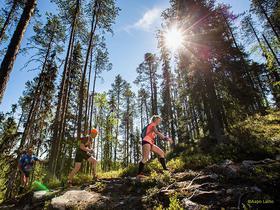Wanderer im finnischen Sommer im Wald bei strahlender Sonne