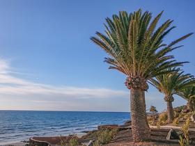 Strand und Palme auf Fuerteventura